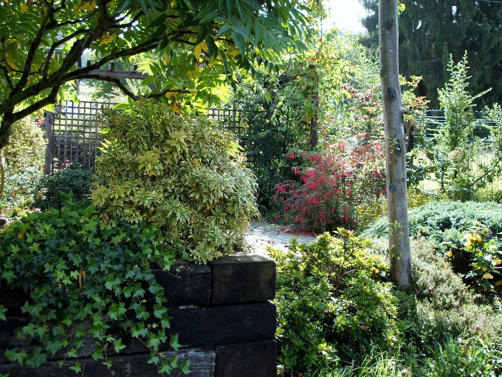 Passion jardin entretien du jardin et suivi for Entretien jardin 22